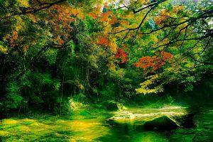autumnal-leaves-727467_960_720
