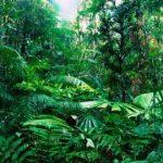 モテの近道!!「ジャングル女子」とは