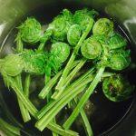 【春の食材】こごみを使ったお料理/旬の食べ物を頂く