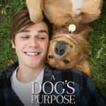 映画「僕のワンダフル・ライフ」を観た感想、犬好きの人にオススメの映画 ※ネタバレ含みます